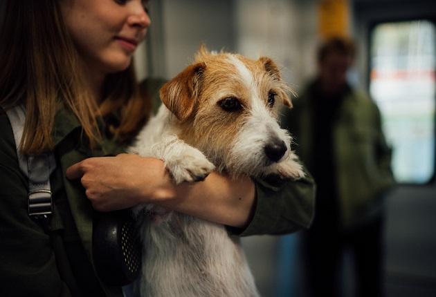Pode viajar com cachorro em ônibus? Manu Karsten responde