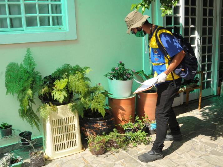 São José dos Campos vai monitorar incidência do mosquito da dengue por inteligência artificial