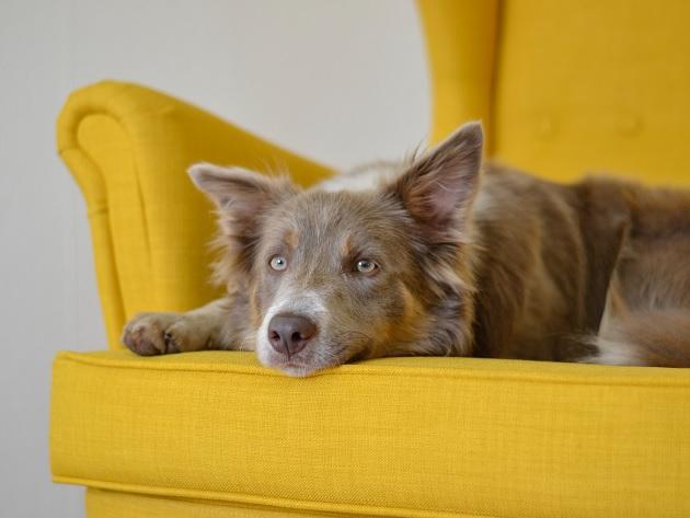 Quais são as causas de convulsão em cães? Veterinária explica