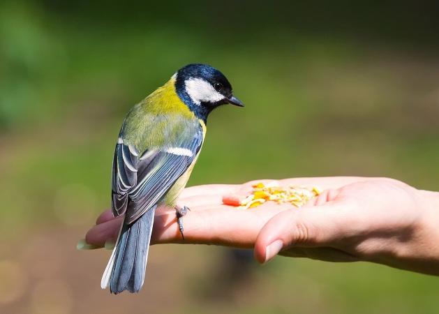 Posso alimentar pássaros que aparecem na varanda? Entenda aqui
