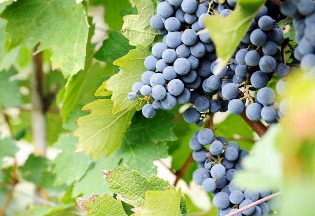 Conheça Ribera del Duero, na Espanha, que produz ótimos vinhos com a Tempranillo