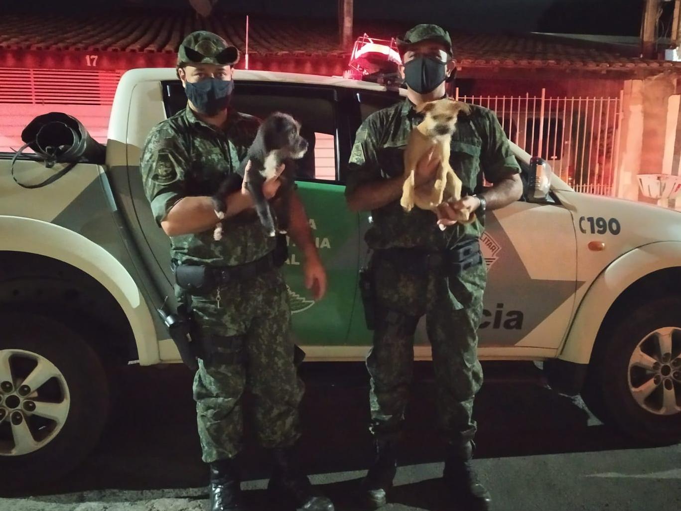 Suspeitos de abandonarem cães em Taubaté são identificados pela Polícia Militar