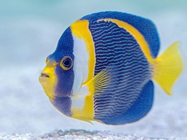 Há veterinários especializados em peixes