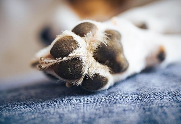 Por que meu cachorro fica lambendo a pata sem parar? Manu Karsten responde