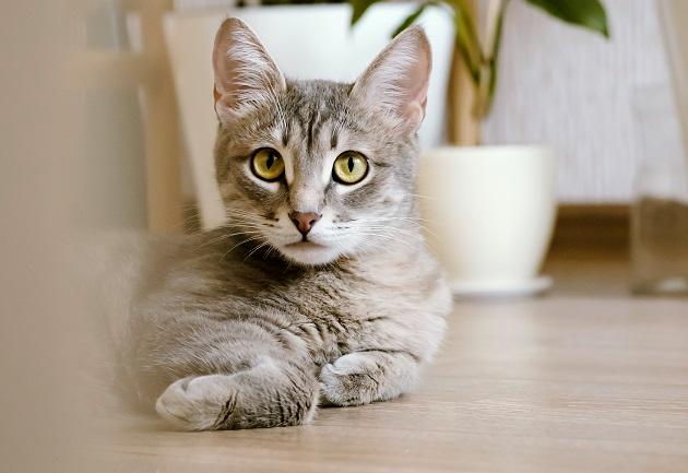 Como adaptar os gatos em uma mudança de casa para apartamento? Manu Karsten responde