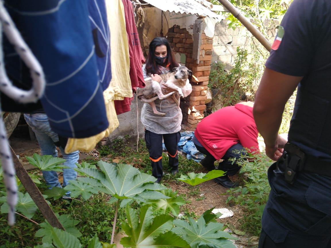 Cães resgatados em situação de maus tratos em Pindamonhangaba