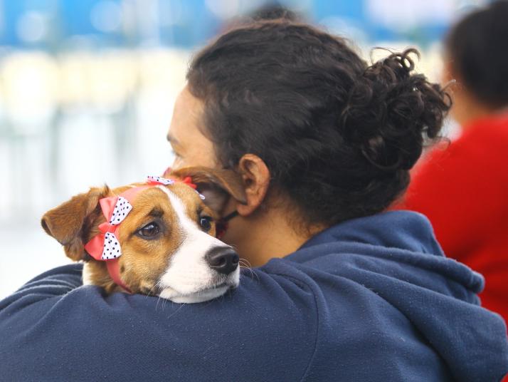 CCZ joseense marca feira comemorativa de adoção de cães e gatos neste sábado (31)