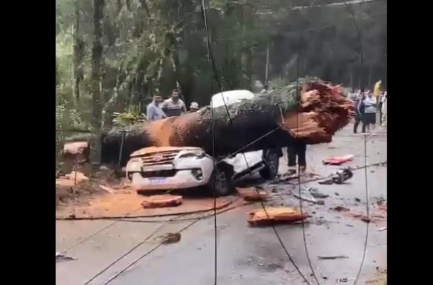 Árvore cai em carro, mata idoso e deixa dois feridos em Campos do Jordão