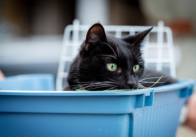 Qual o melhor tipo de areia para gatos? Veterinária responde