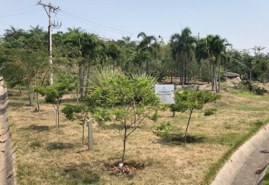 Dia da árvore é comemorado com plantio de mudas, em projeto da Prefeitura do Rio