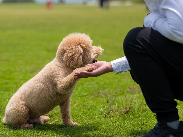 Como criar vínculo com o cachorro adotado? Manu Karsten responde