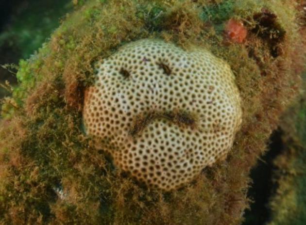 """Imagem de """"coral triste"""" em Noronha viraliza; fotógrafa vê """"mensagem da natureza"""""""