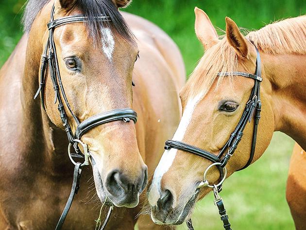 Anvisa autoriza testes em humanos de soro anticoronavírus com plasma de cavalos