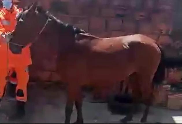Cavalo cai dentro de quarto e dá susto em moradores de casa em MG