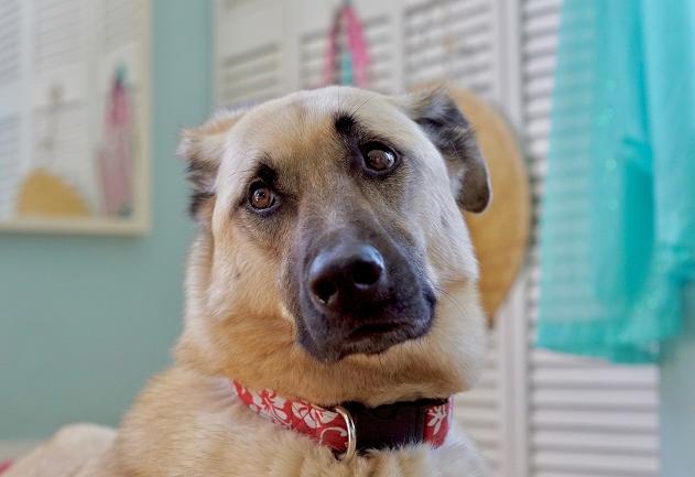 Meu cachorro só faz xixi nos cantos do tapete higiênico: o que fazer? Manu Karsten responde