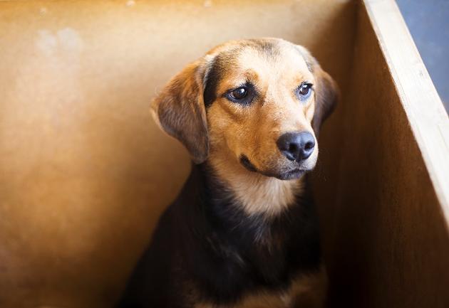 Deixar o cachorro frequentemente preso na varanda do prédio pode configurar maus-tratos, explica Manu Karsten