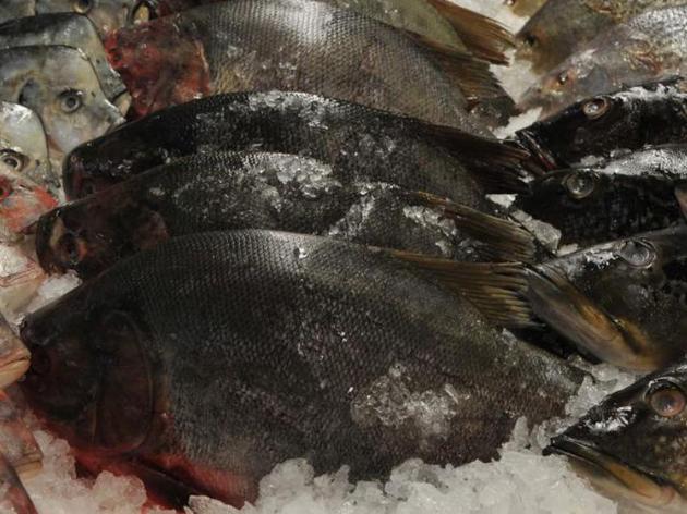 Secretaria de Saúde do Amazonas recomenda restrição no consumo de peixe