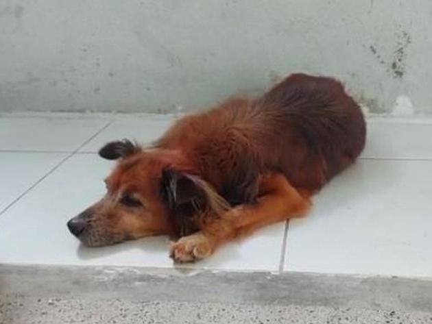 Cachorro vaga por hospital em Fortaleza (CE) à espera de dono que faleceu