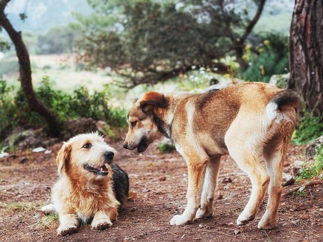 Como fazer meu cachorro se acostumar com um novo? Manu Karsten responde