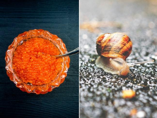 Você sabia que caviar e escargot já foram pratos populares? Entenda