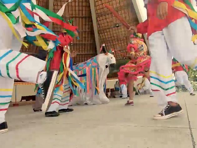 Boi Calemba Pintadinho: conheça o grupo que tem tradição centenária no RN