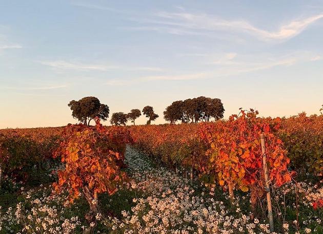 Vale do Rhône: conheça a região francesa famosa por vinhos intensos