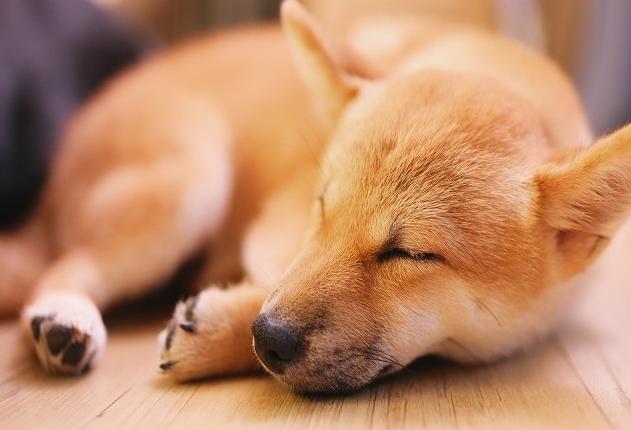 Como abrigar o cachorro em noites de muito frio? Manu Karsten responde