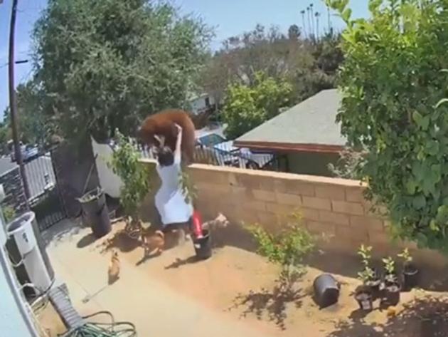 Mulher bate em urso para defender cachorros