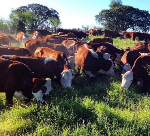 Não há previsão para retomada da exportação de carne bovina para a China