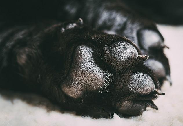 O que fazer quando as patas do cachorro ficam ressecadas? Manu Karsten responde