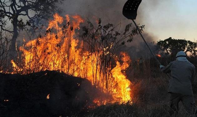 Grandes empresas pedem protagonismo brasileiro em ações para a preservação do meio ambiente