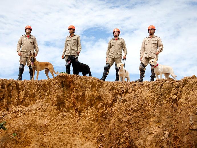 Cachorra que trabalhou nos resgates de Brumadinho ajuda nas buscas ao serial killer Lázaro