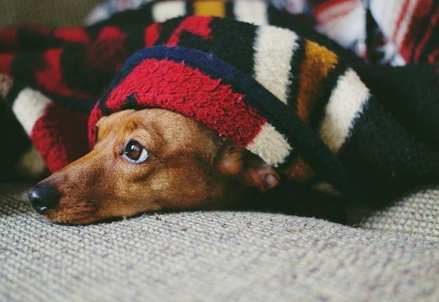 Cachorro sente frio? 3 sinais de que ele pode estar desconfortável com a temperatura