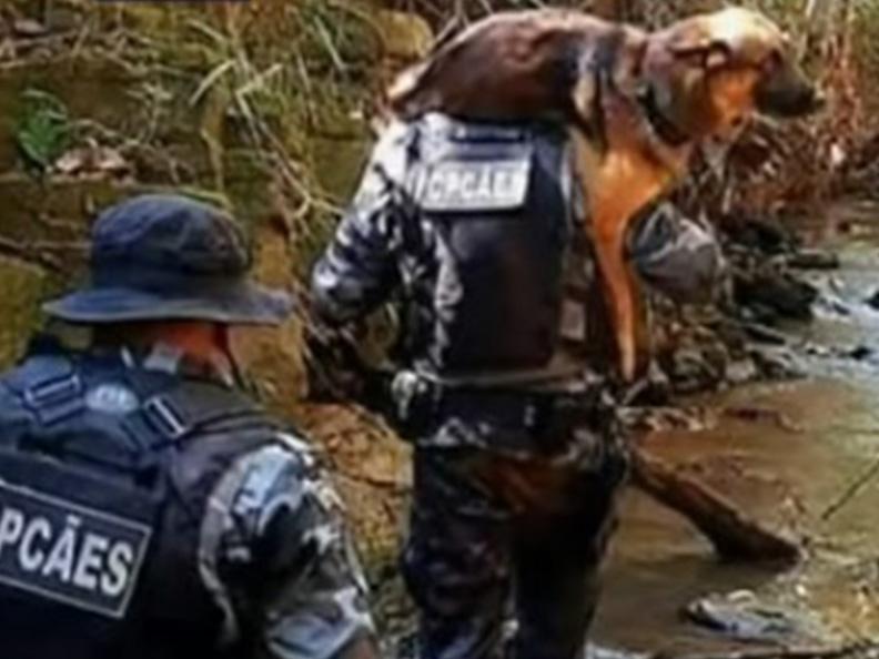 Cão farejador fica ferido durante buscas por Lázaro Barbosa