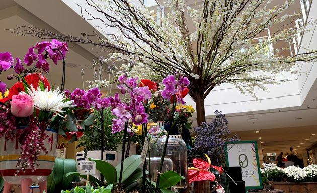 """Em celebração à estação das flores, CenterVale Shopping recebe exposição """"Vejo flores em você"""""""