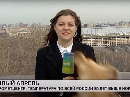 Cachorro pega microfone de repórter em transmissão ao vivo e sai correndo; assista