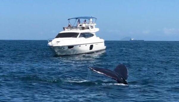 Primeira baleia jubarte em 2021 é flagrada no litoral norte de São Paulo