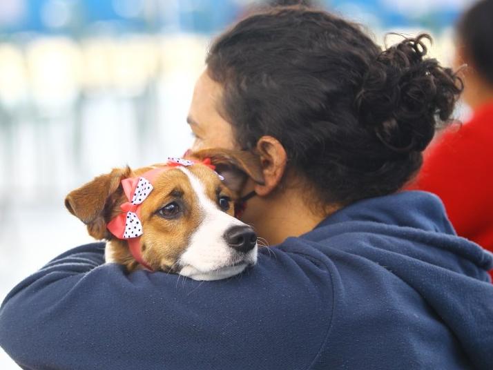 Feira de adoção terá mais de 70 animais disponíveis em SJC