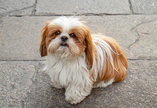 Quando é a hora certa de castrar o cachorro? Manu Karsten responde