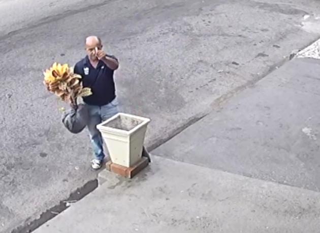 Após vídeo viralizar na internet, taxista devolve planta furtada no Rio de Janeiro