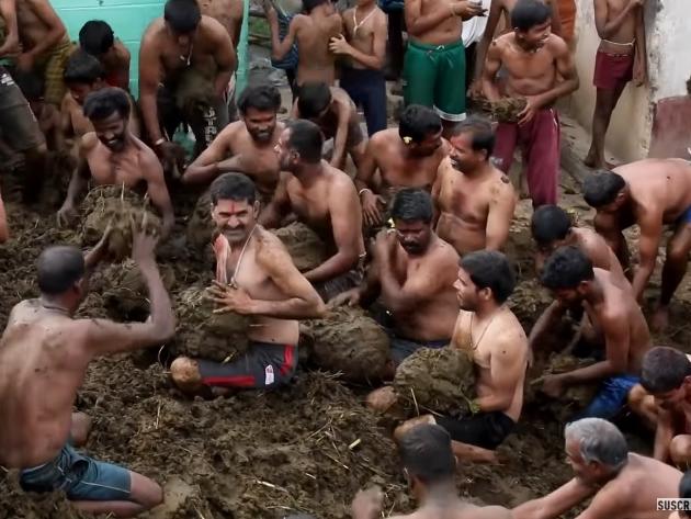 Esterco de vaca é utilizado por Indianos para celebrar o fim de feriado religioso